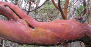 cropped-arbutus-walbran-park-IMG_0693.jpg